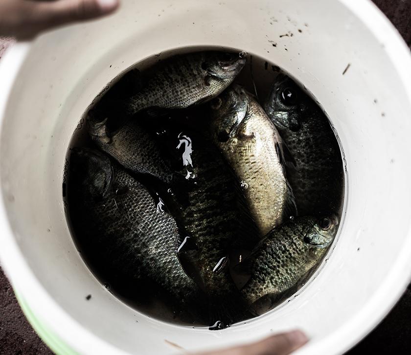 魚を釣った子供を撮影する親子の写真